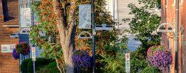 Downtown Acton street, hanging baskets